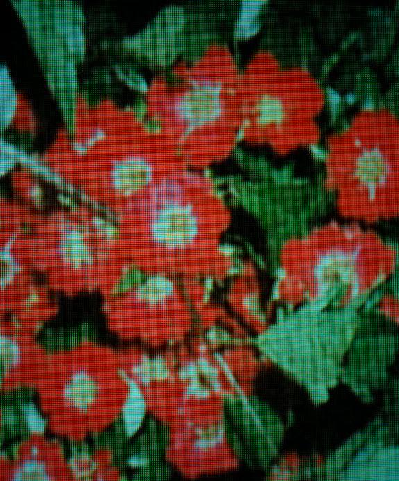 Archival pigment print, 33 x 40