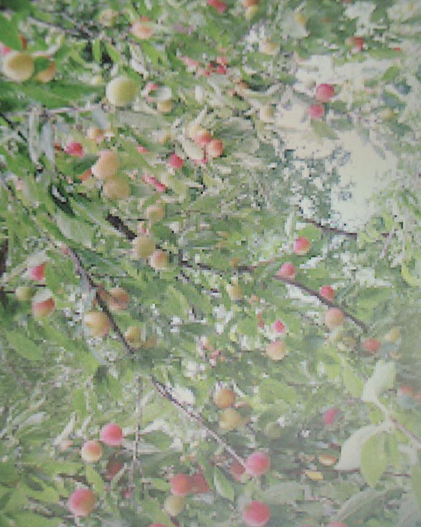 Archival pigment print, 20 x 24